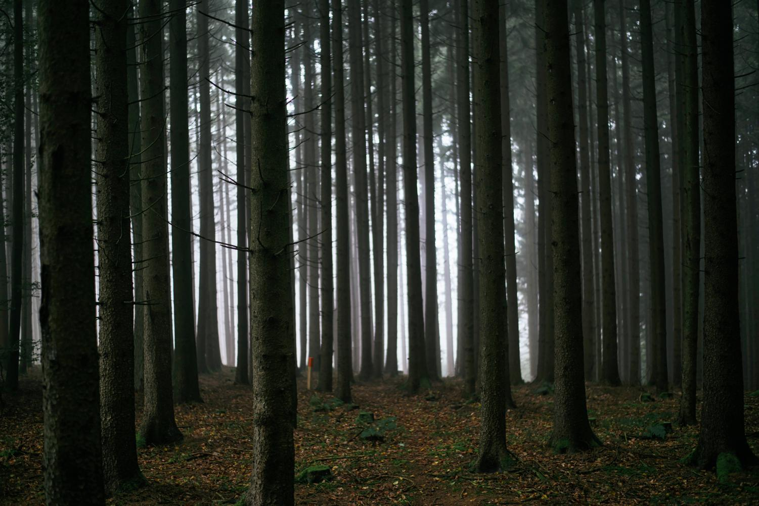Dark forest portraying how dense the forest is in which Rodger lives.